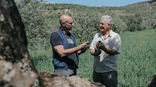 Rayan and Ghassan work together to create their organic extra virgin olive oil using native souri ...