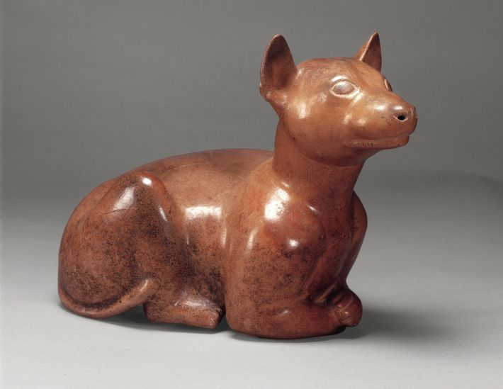 Ceramic vessels in the shape of xolo dogs are frequently found in 2,000-year-old tombs in western ...