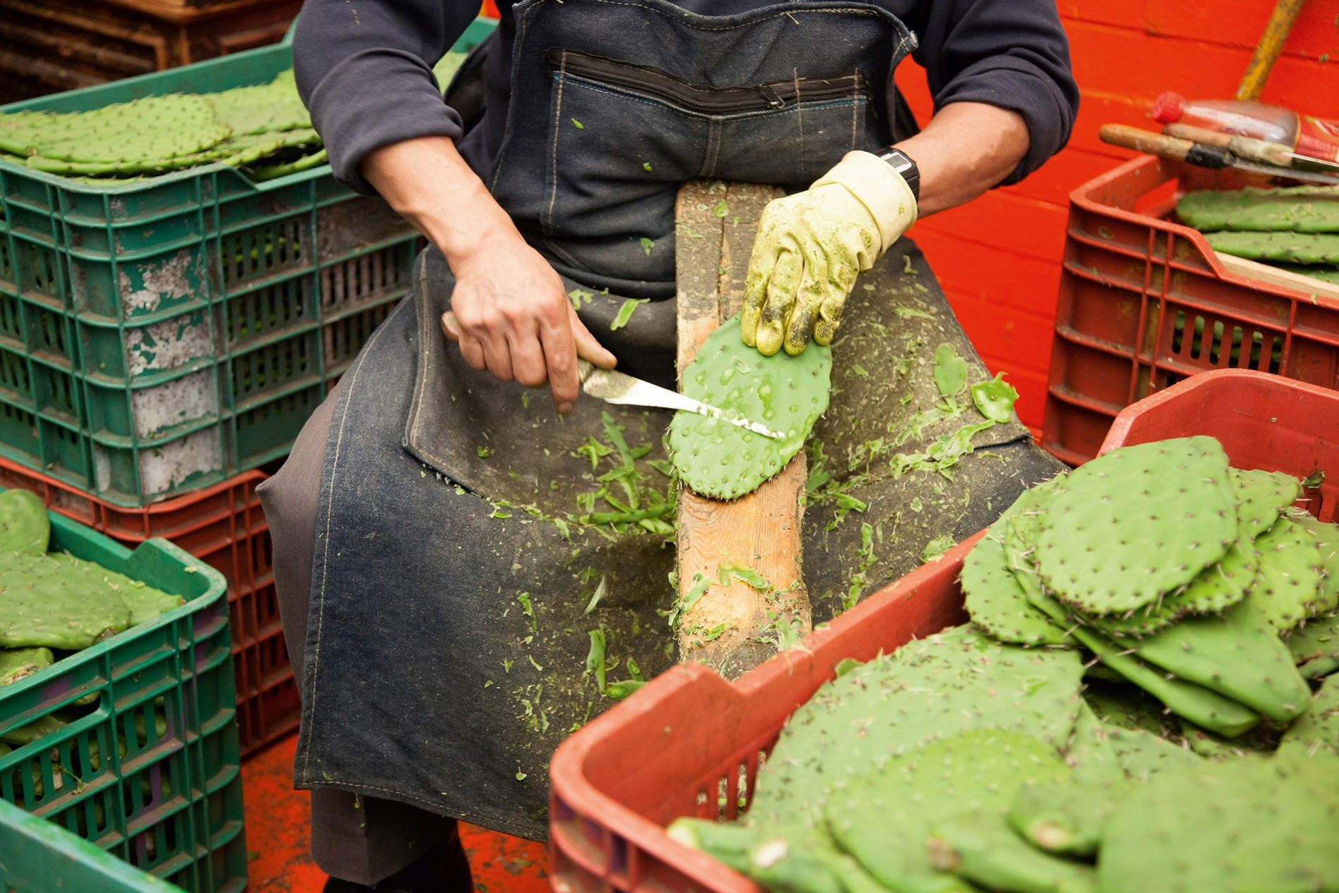 Nopales being prepared for sale in Mexico City