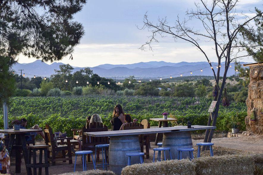 On the vineyard trail in Mexico's Baja California