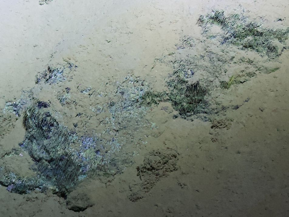 Possible microbes in the Mariana Trench hint at life on Jupiter's moon