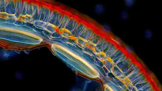 See the Plant Kingdom's Hidden Microscopic Wonders
