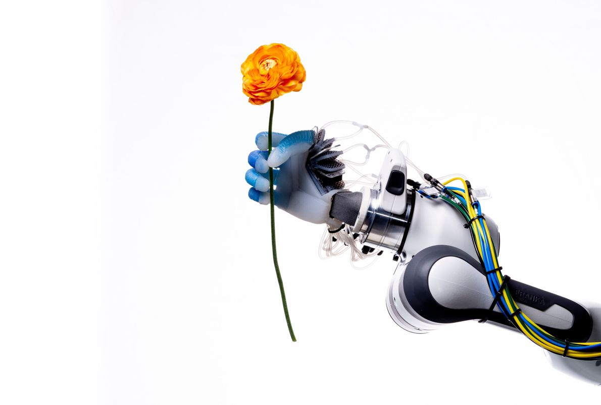 With a firm yet delicate grip, a robot hand at the Robotics and Biology Laboratory at ...