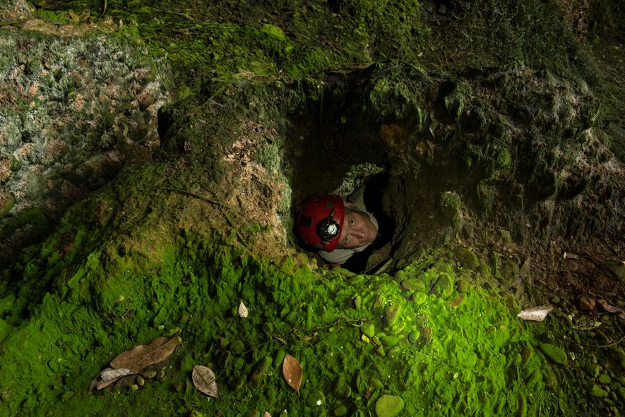 Expedition leader Andy Eavis accesses a small algae-covered cave opening. He has been studying and exploring the cave systems below Gunung Mulu National Park since 1979.