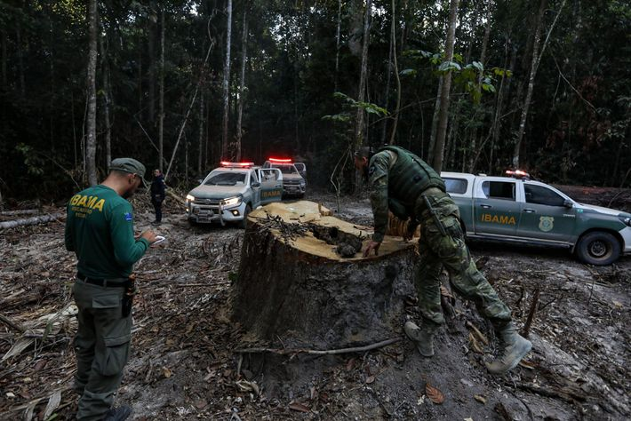 IBAMA agents inspect a tree stump outside the frontier settlement of Boa Vista do Pacarana, a ...