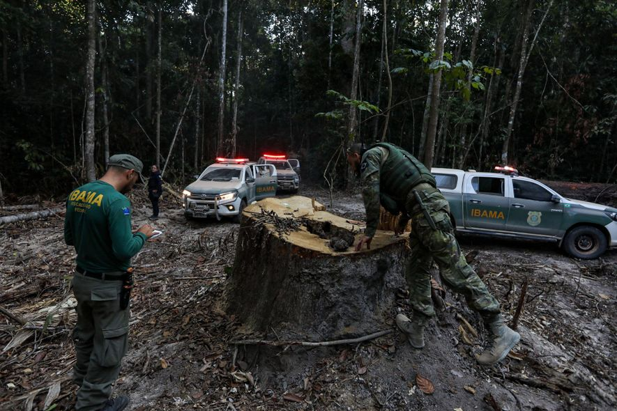 IBAMA agents inspect a tree stump outside the frontier settlement of Boa Vista do Pacarana, a settlement within the municipality of Espigão d'Oeste. The operation was launched in mid-July after a truck carrying aviation fuel to IBAMA helicopters was attacked and burned—by assailants connected with the logging industry, officials suspect.