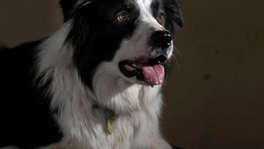 Some dogs are geniuses—just like humans
