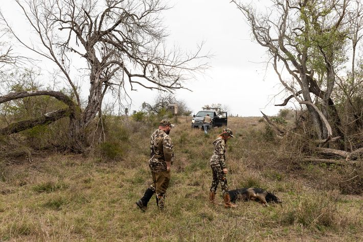 Guest Adam Kunz and hunting guide Kristin Parma prepare to haul a wild boar out of ...