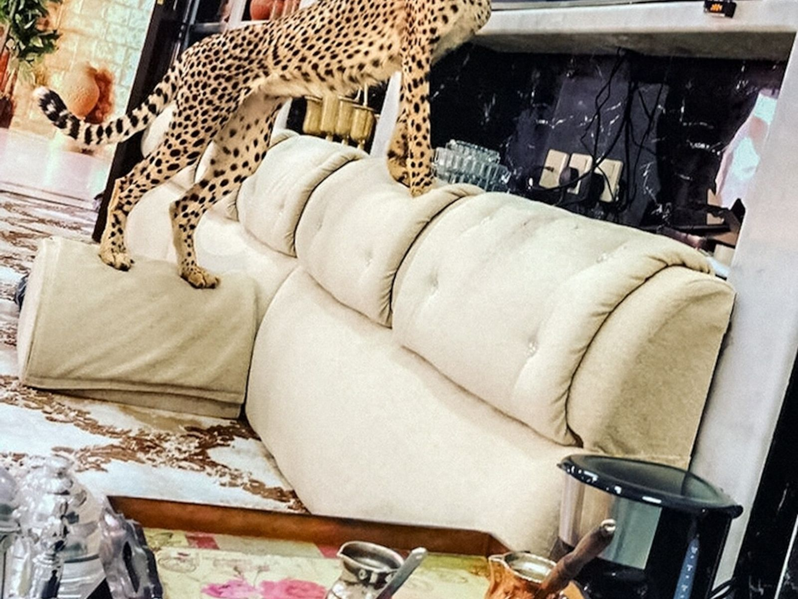 """For those who buy pet cheetahs, """"the novelty wears off quickly, aside from the picture you ..."""