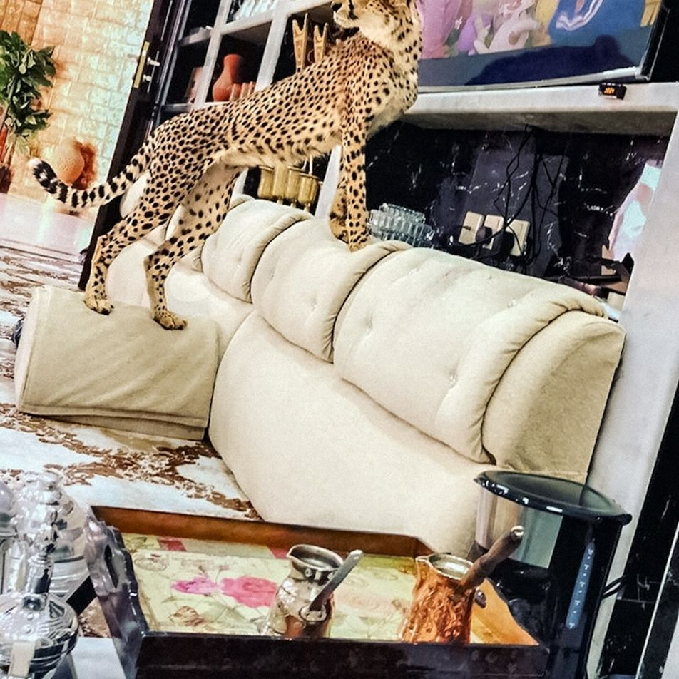 How trafficked cheetah cubs move from the wild and into your Instagram feed