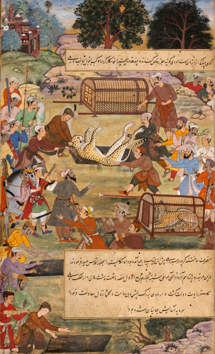 Akbar the Great, a 16th-century ruler of Mughal India, hunted deer with cheetahs, once found across ...