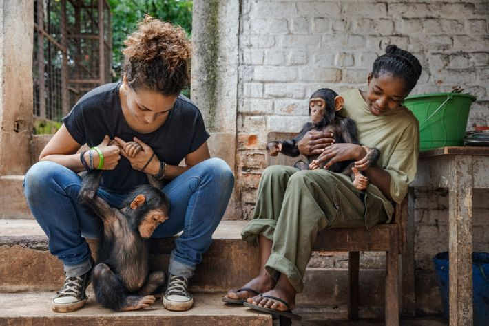 Itsaso Vélez del Burgo (at left), the technical director of the sanctuary, plays with baby chimp ...