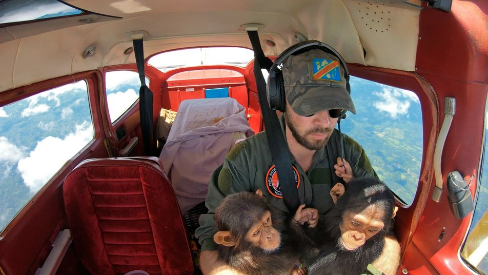 Central African sanctuary gives hope to chimps—and their rescuers
