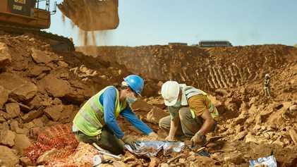 The priceless primate fossils found in a rubbish dump