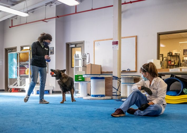 Cynthia Otto, director of the Working Dog Center, works with Rico, a German shepherd. Otto believes ...