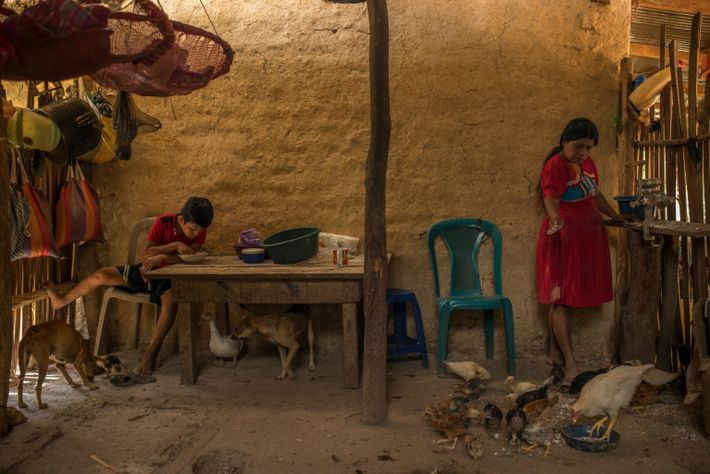 Vitalina García feeds chickens in the house she rents from her brother, who migrated to the ...