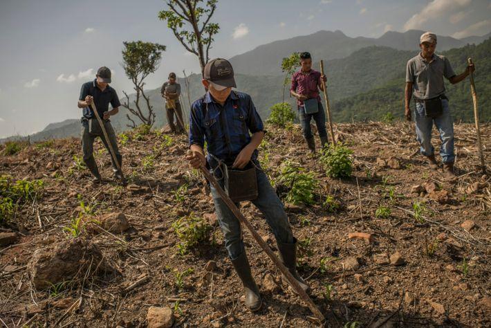A group of men in a village called Agua Fria, in eastern Guatemala, fertilize a plot ...