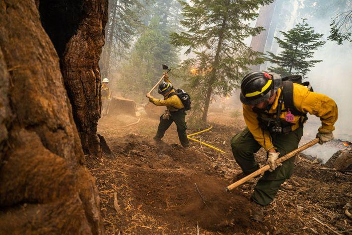 Protecting Sequoias