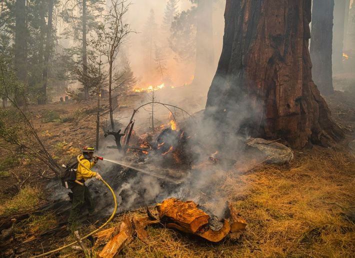 Sequoia Fire