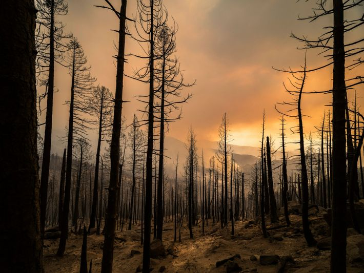Scorched Sequoia National Forest