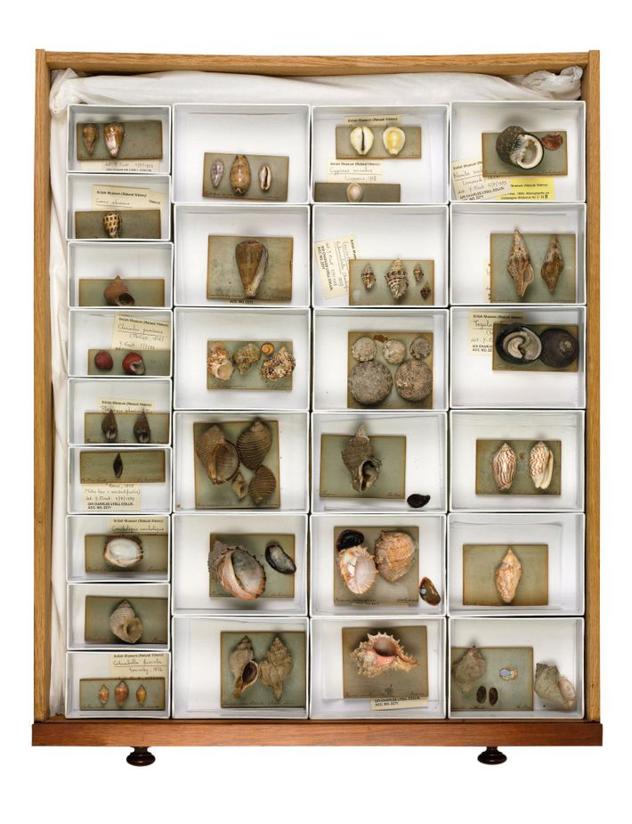 Sample case with mollusk shells collected by Darwin from various locations during his trip. Natural history ...