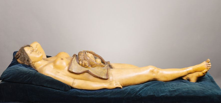 The Anatomical Venus was one of the most complex wax figures used in training physicians. The ...