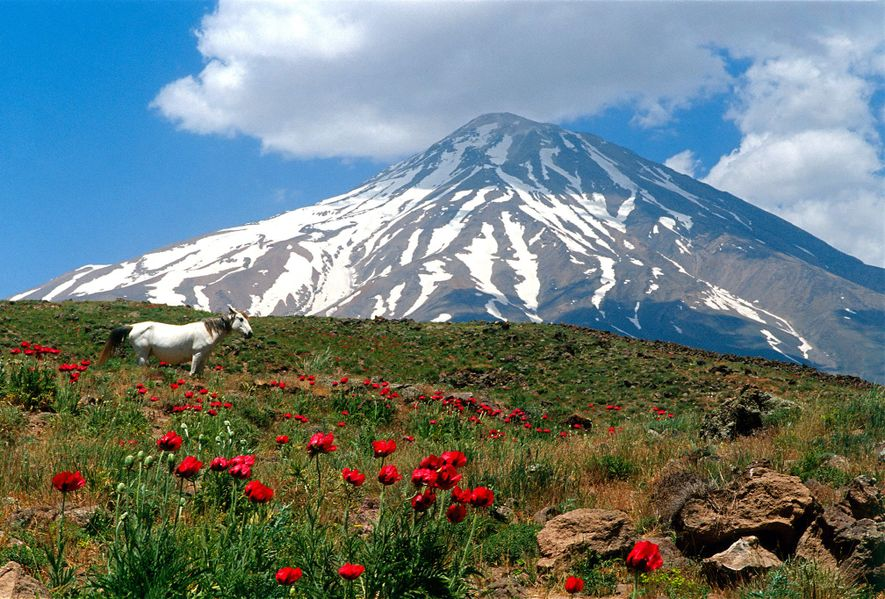 Poppies grow within sight of Mount Damavand, in Iran, the highest peak in the Middle East.
