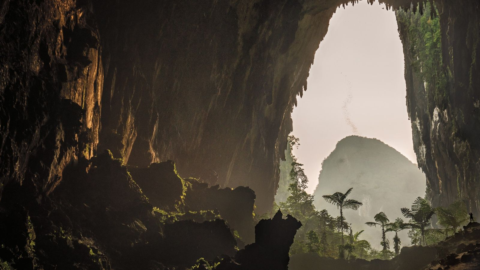 At dusk, a swarm of bats disperses to hunt in the rainforest surrounding Deer Cave. One ...