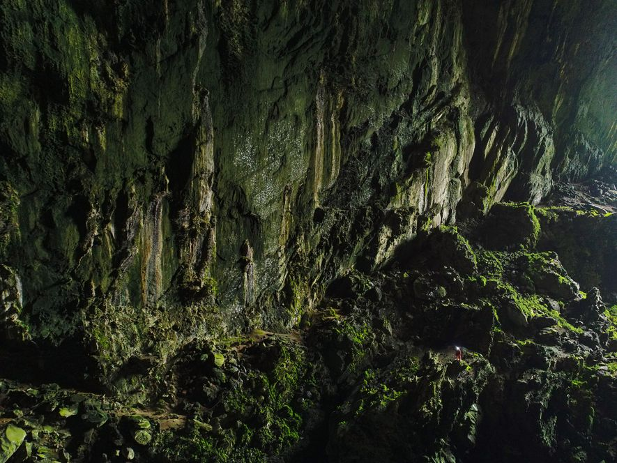 A spelunker appears as a small speck in Deer Cave's gaping mouth—nearly 500 feet high. Sunlight penetrates deep inside, allowing mosses, ferns, and algae to flourish near the entrance. On the floor, crabs, insects, and bacteria feed on bird and bat guano.