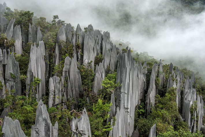 Limestone pinnacles pierce dense vegetation near the center of Malaysia's Gunung Mulu National Park. Eroded from ...