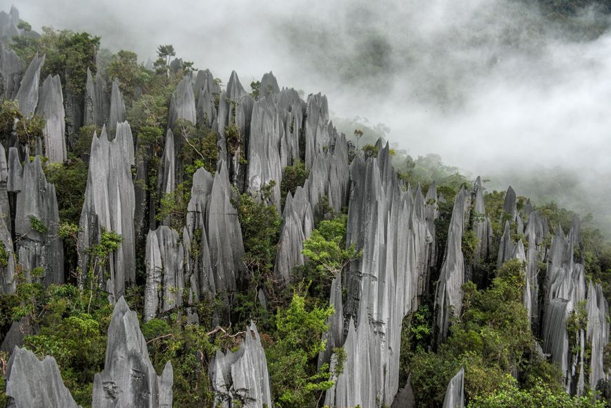 Limestone pinnacles pierce dense vegetation near the center of Malaysia's Gunung Mulu National Park. Eroded from the thick limestone bedrock over hundreds of thousands of years, these karst features hint at the otherworldly caverns belowground.