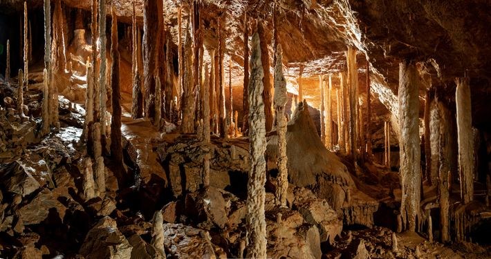 Thick stands of stalagmites rise from moon-pale banks of sediment in the Drunken Forest—a cave named ...