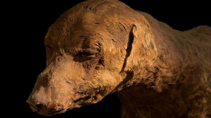 Touching, and chilling: these animals were mummified by ancient Egyptians