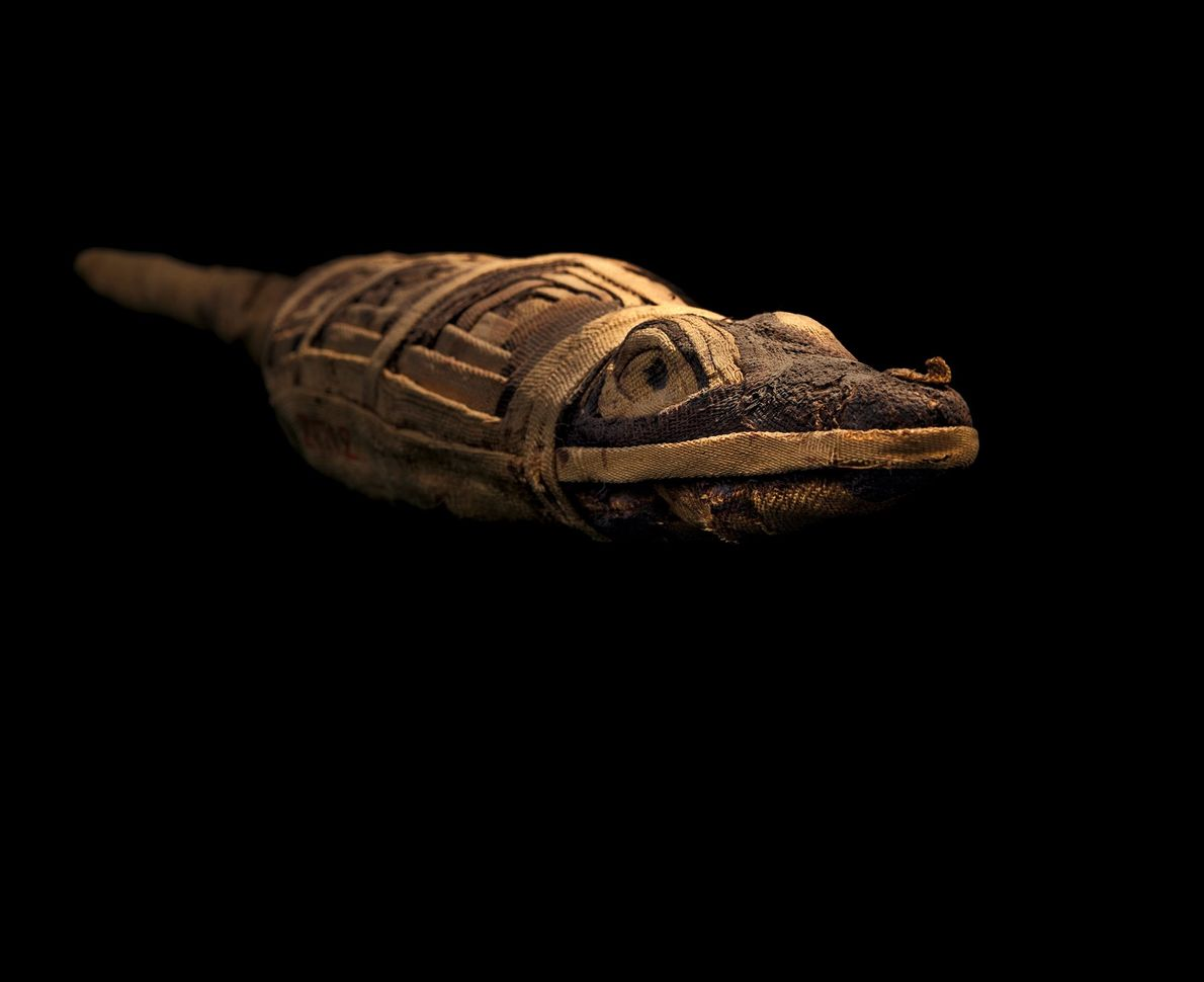 Votive mummies, each buried with a prayer, are infinitely varied but not always what they seem. ...