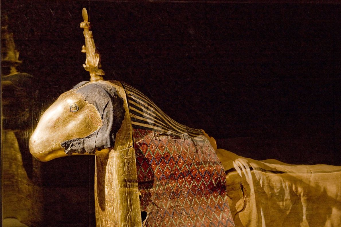 A sacred ram is enclosed in a casing detailed with gold and paint. As the living ...