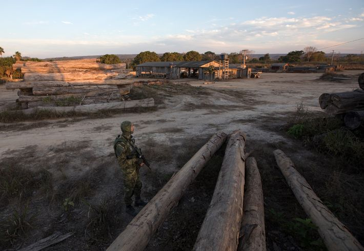 A lone officer from IBAMA keeps vigil at a sawmill in Boa Vista do Pacarana, Rondônia. ...