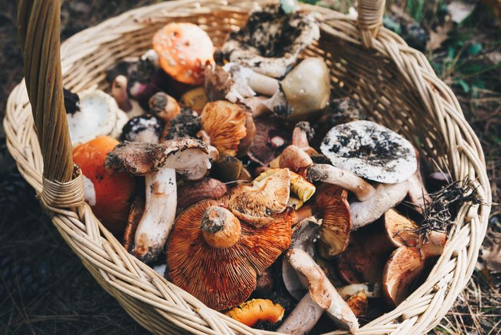 The area is a mushroom- and chestnut-hunter's treasure trove, so it's worth asking your hotel about ...