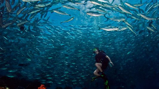 Discover the World's Greatest Scuba Diving Spots