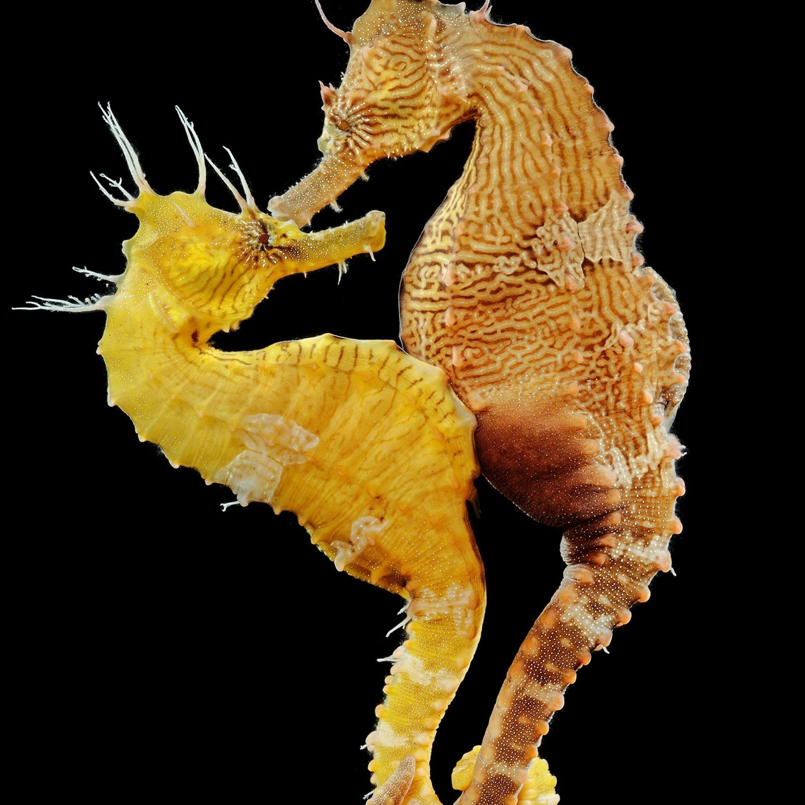 departments-animals-pouch-seahorse