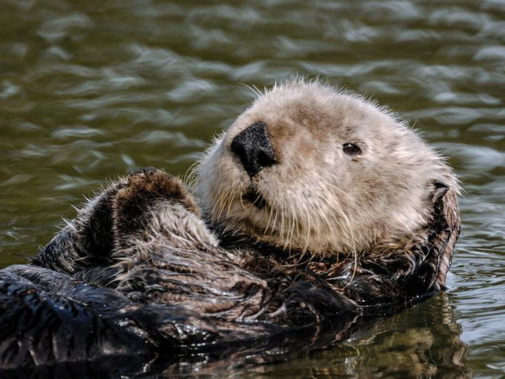 departments-animals-pouches-sea-otter