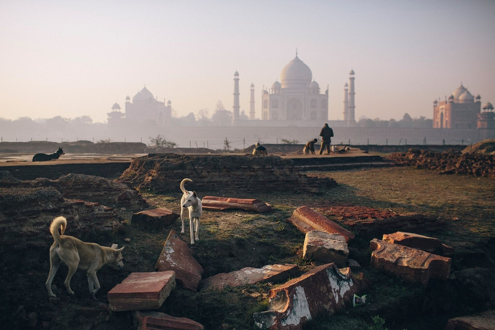 India is home to more than 35 million free-roaming dogs, such as these canines near the ...