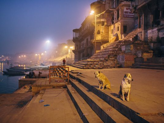 'The new cool': Adopting street dogs is gaining popularity in India