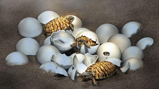 Fossilised egg from prehistoric giant turtle reveals baby inside