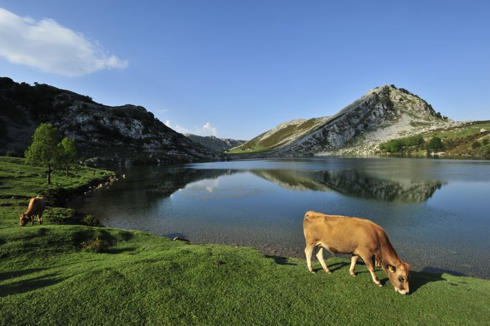The Picos de Europa National Park ranges across dramatic peak placid lakes, and limestone caves, as ...