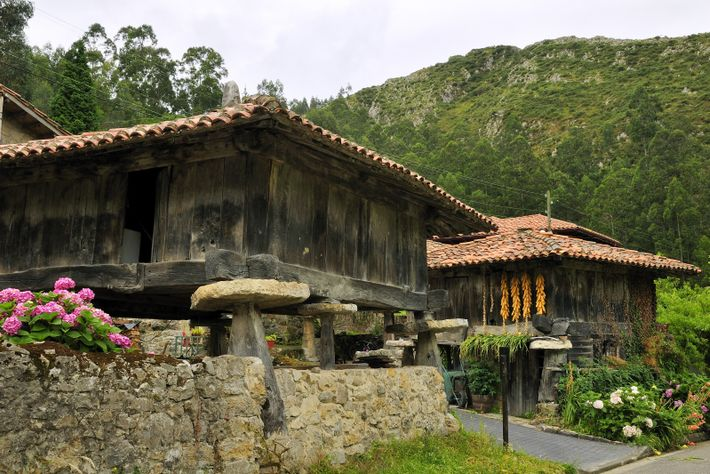 Traditional stilted granaries, or hórreos, are an emblematic sight across the region's beautiful farmlands, some dating ...