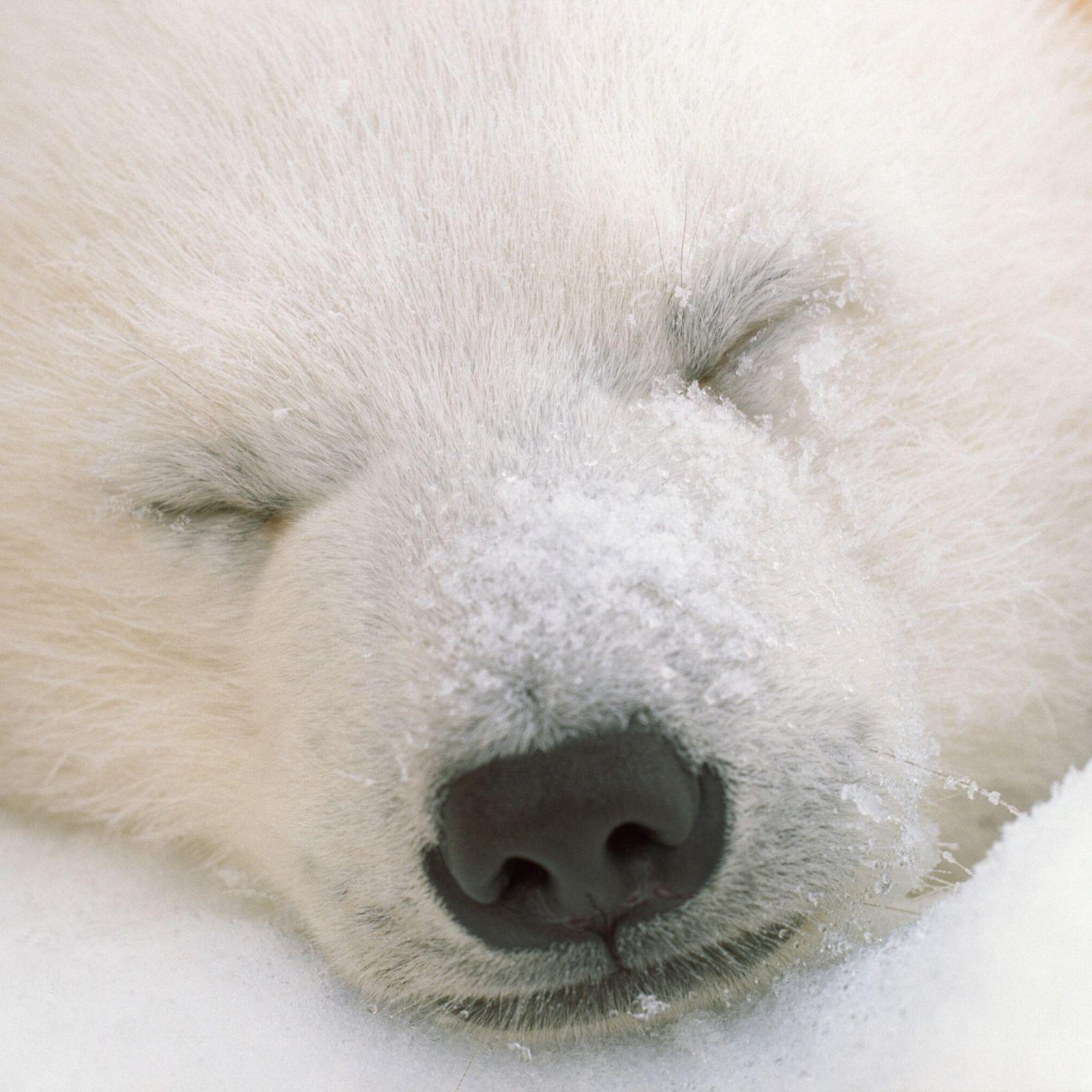 Animal Sleeping Reference