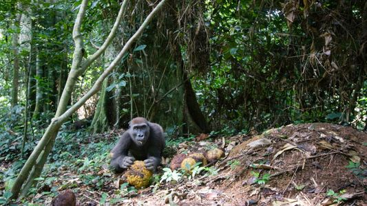 You can now hear rainforest sounds worldwide—here's why that matters