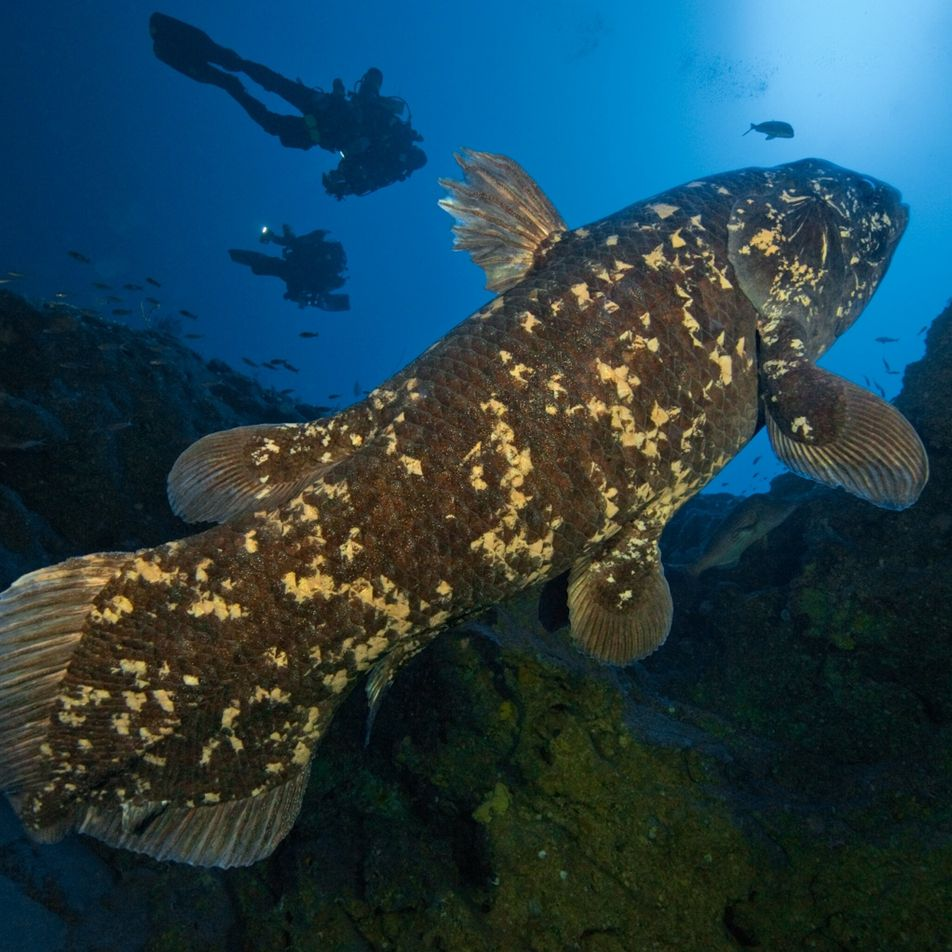 These primitive, deep-sea fish live to 100, surprising scientists