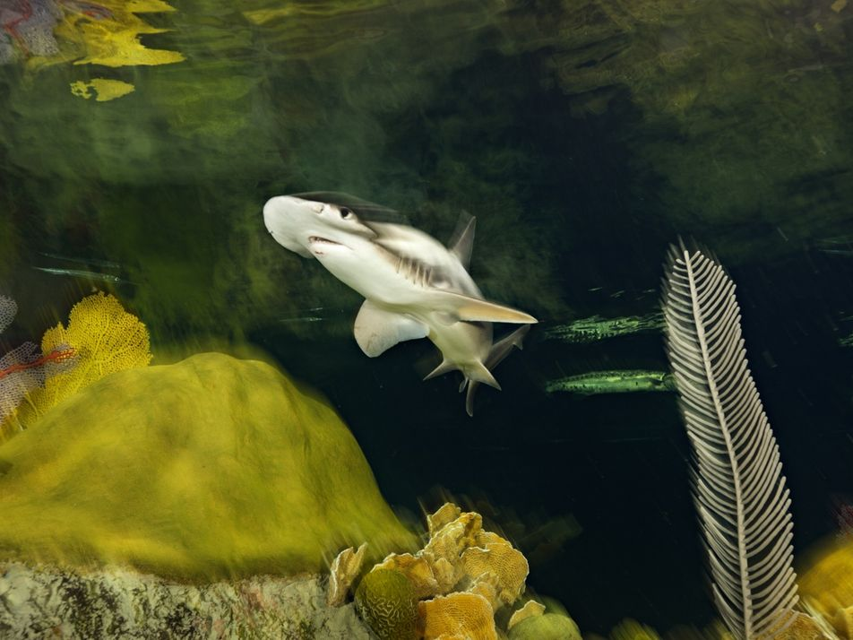 Sharks can navigate via Earth's magnetic field, study confirms for the first time