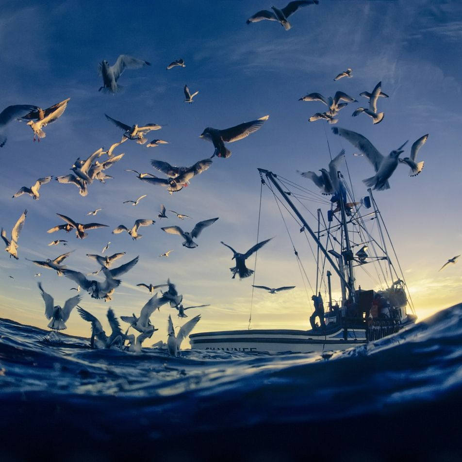 How we can help coral and seabirds survive a warming world